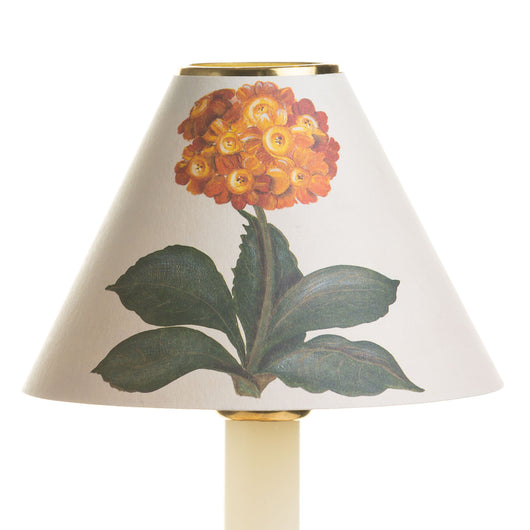 Candle Shade-Printed Card-Auricula-Yellow | Nicholas Engert Interiors