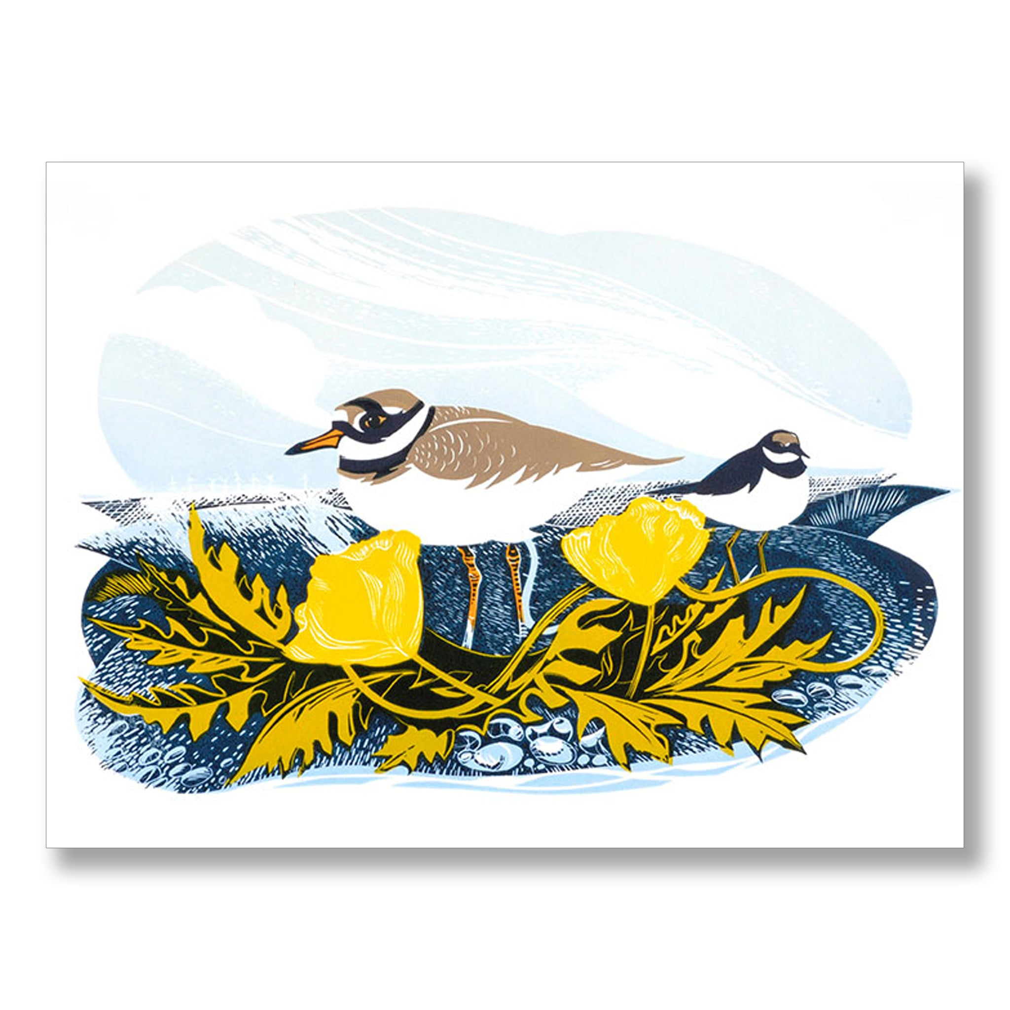 Ringed Plovers by Jeremy James