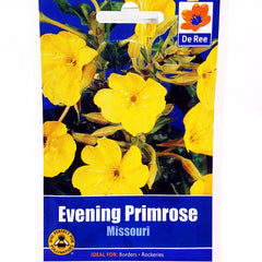 Evening Primrose Missouri
