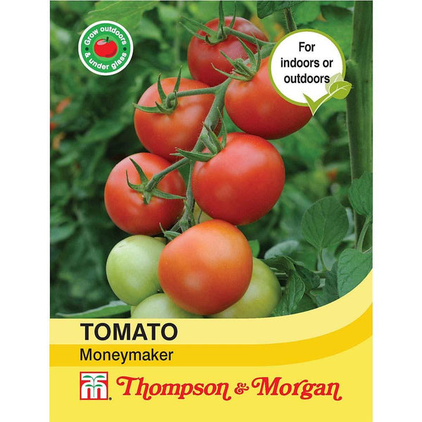 Tomato Moneymaker T&M