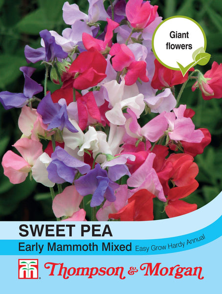 Sweet Pea Early Mammoth Mixed