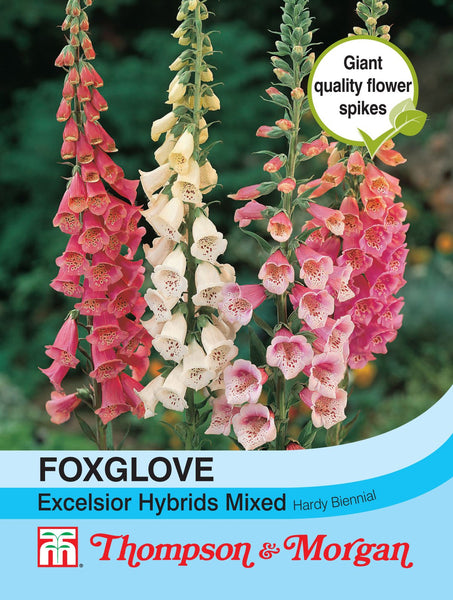 Foxglove Excelsior Hybrids Mixed