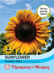 Sunflower Russian Giant