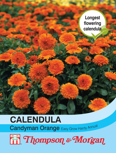 Calendula Candyman Orange