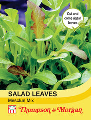 Salad Leaves - Mesclun Mixed
