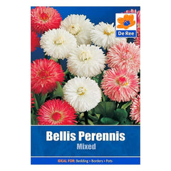 Bellis Perennis Mixed