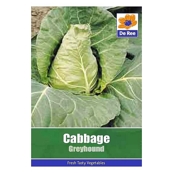 Cabbage Greyhound