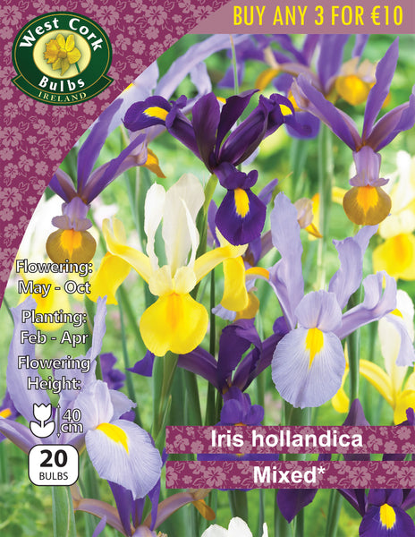 Iris Hollandica Mixed