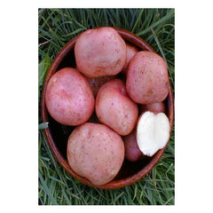 Potatoes - Kerrs Pink Maincrop - 2Kg Nets