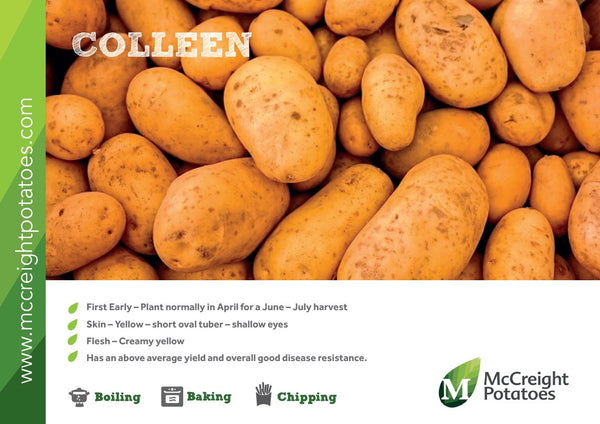 Colleen Seed Potatoes 2kg