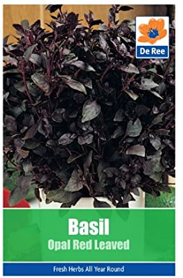 Basil Opal Red Leaved