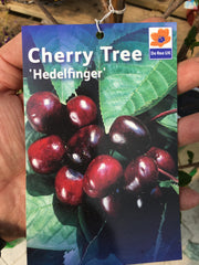 Cherry tree hedlefinger