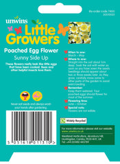 Unwins Little Growers Poached Egg Flower Sunnyside