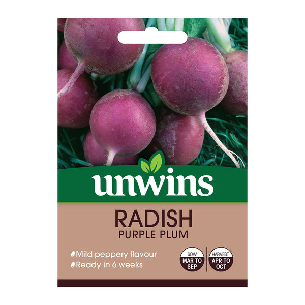 Radish Purple Plum