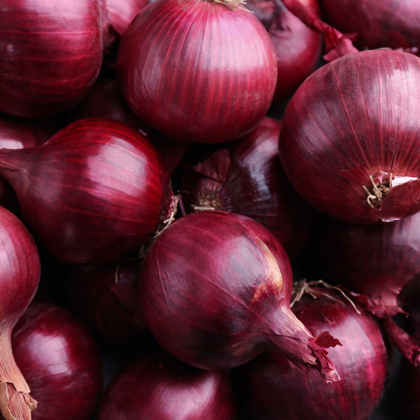 Onion Sets - Red Barron (Spring Planting - 75pce)