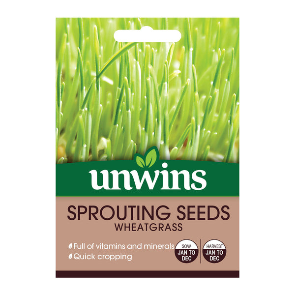 Sprouting Seed Wheetgrass