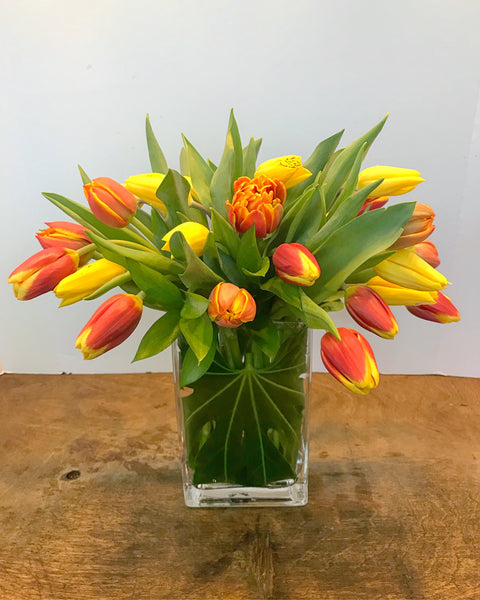 MV119 - Multi Colored Tulip Mania