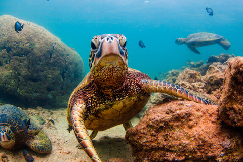 11 Facts you probably didn't know about turtles!