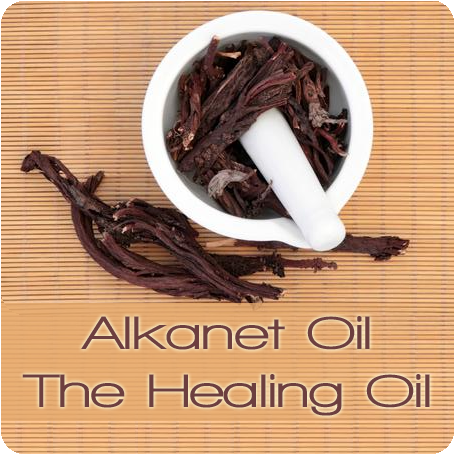 Meet Our Ingredients: Alkanet Oil