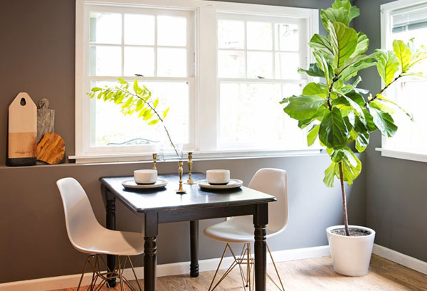 apartment therapy fiddle leaf fig tree