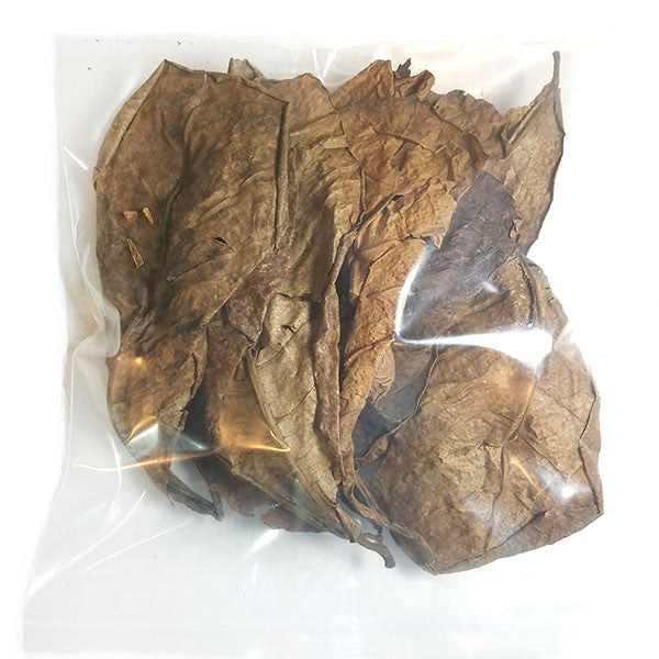 Dried Indian Almond Leaf Litter