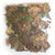 Dried Mixed Leaf Litter