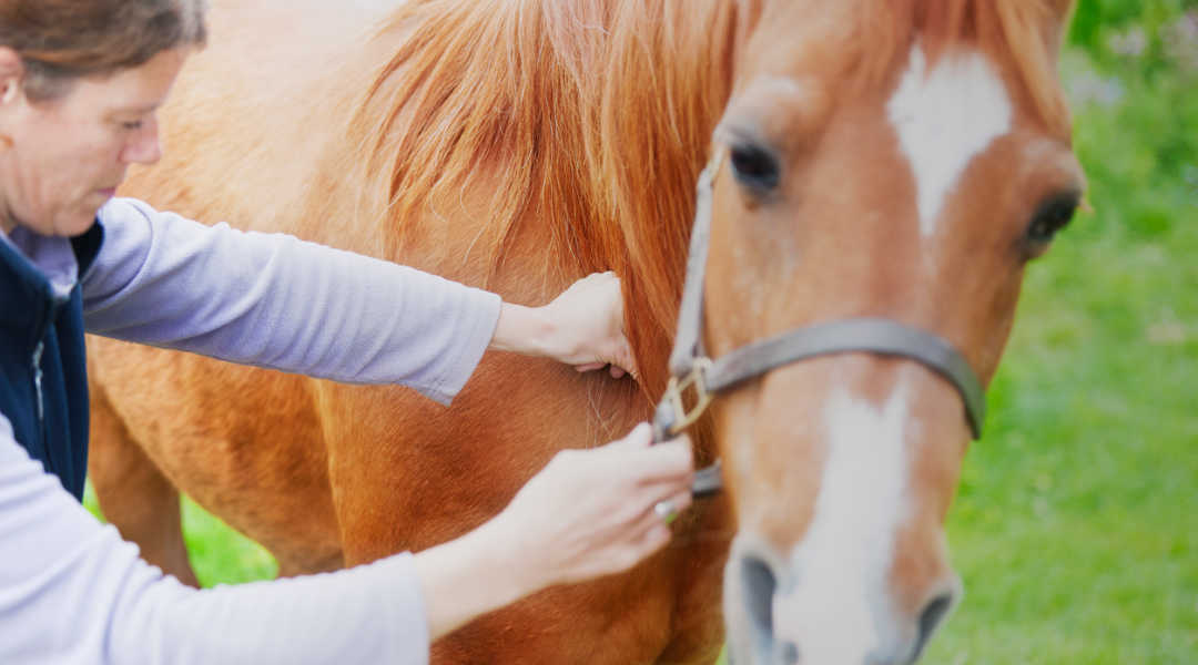 How to Find the Right Bodyworker For Your Horse