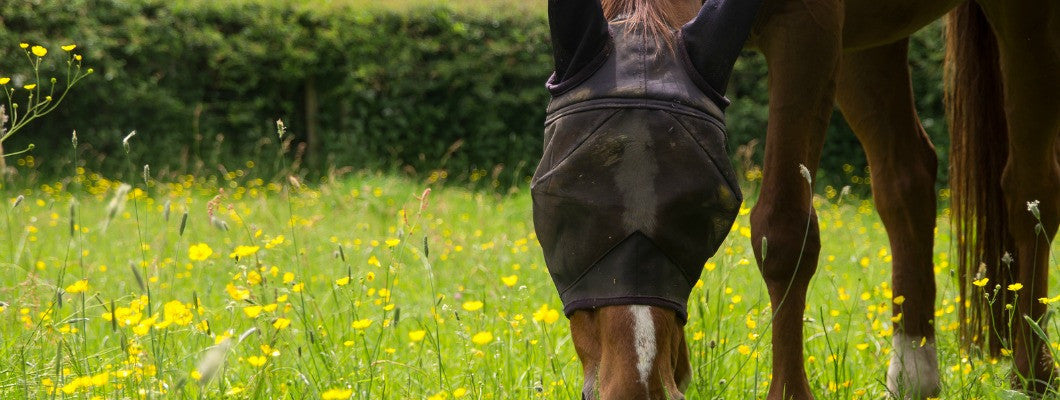 horse in pasture with fly mask on