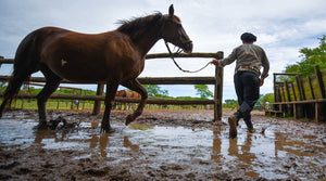Here's the Dirt on Muddy Paddocks and Horse Health...
