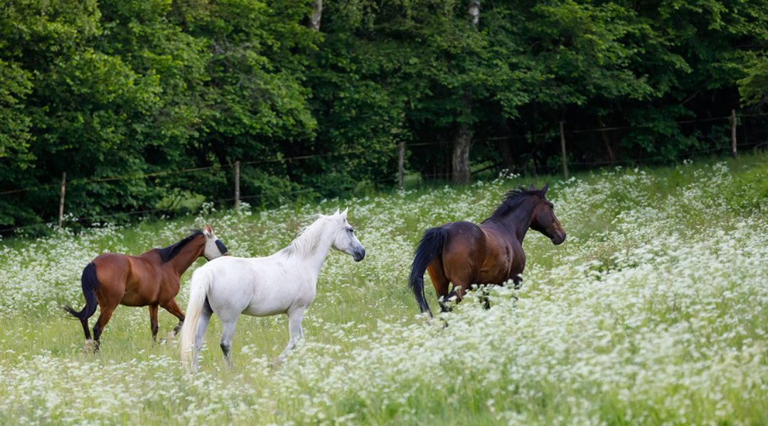 three horses in pasture