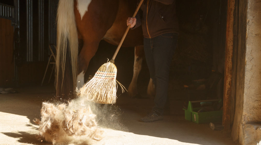 sweeping out horse barn