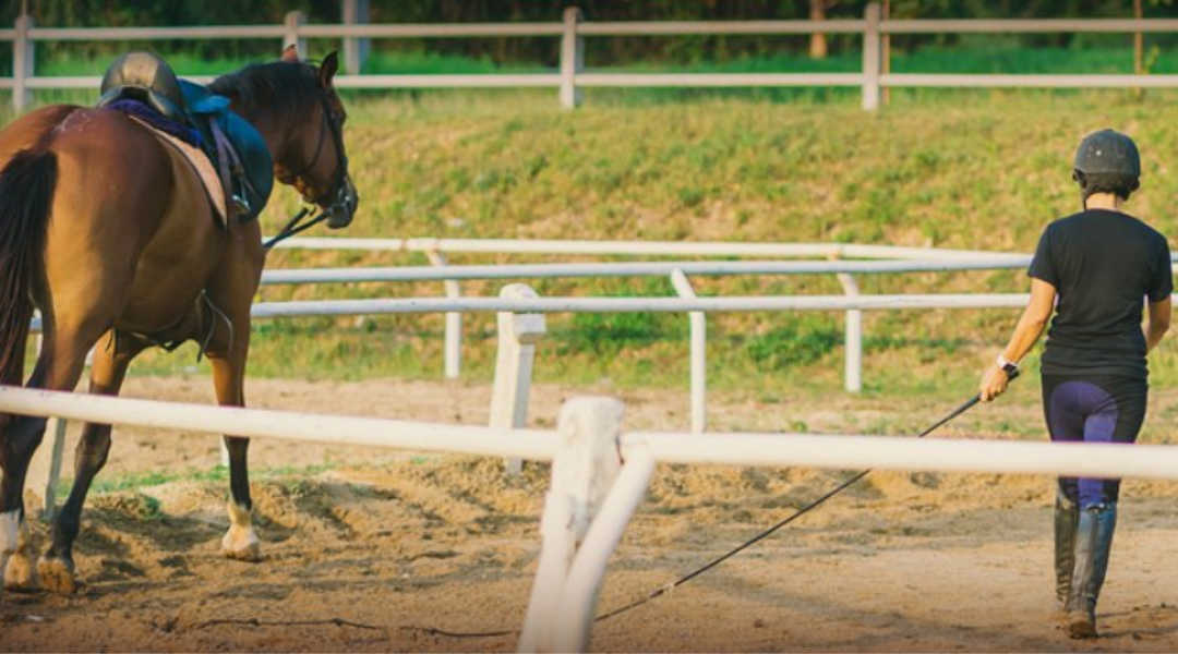 Condition training to prevent injury in horse