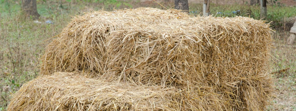 This Trick Makes Yellow Jackets Buzz Off, But Saves Hay