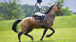 woman riding performance horse in field