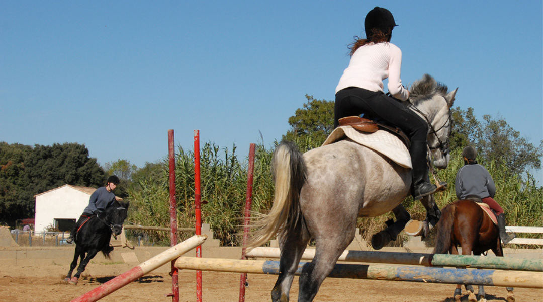 horse jumping training