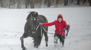 horse training in winter