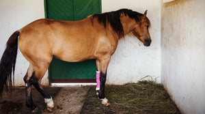 horse with injured leg