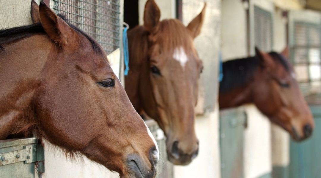 Strategies to Help a Performance Horse Cope With Stall Rest