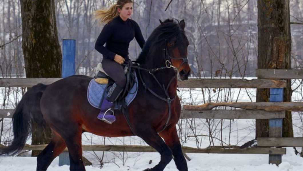 horse working out in cold weather