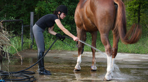 How to Keep Your Horse Cool For Summer Competitions