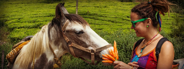 These 'Human' Foods Can Harm Your Horse   BRL Equine Nutrition