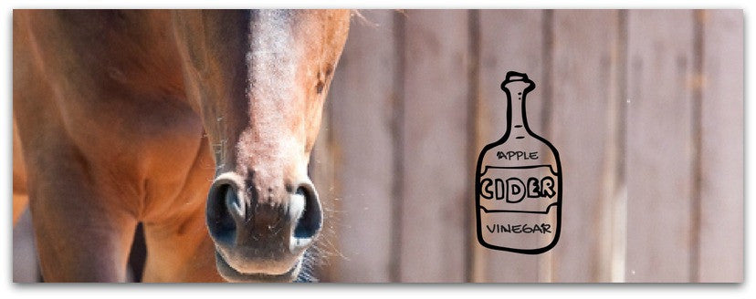 Horse grooming tip - apple cider vinegar
