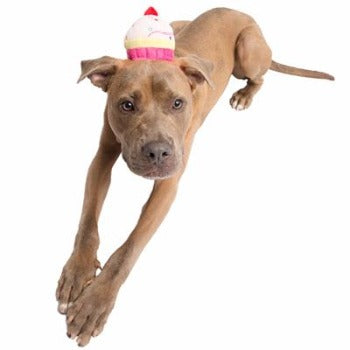 Pet Krewe Cupcake Dog Hat-Paws & Purrs Barkery & Boutique