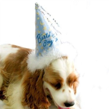 Pampet Puppe Love Birthday Girl Dog Hat-Paws & Purrs Barkery & Boutique