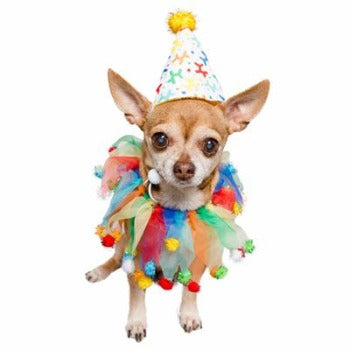 Pet Krewe Celebration/Birthday Hat & Collar Set-Paws & Purrs Barkery & Boutique