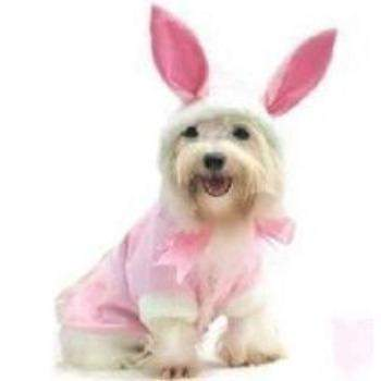 Pampet Puppe Love Bunny Dog Costume-Paws & Purrs Barkery & Boutique
