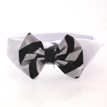 Dog Bow Tie Collar Set.
