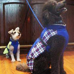 Doggie Design Alpine All Weather Dog Coat-Royal Blue Plaid-Paws & Purrs Barkery & Boutique