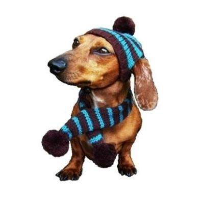 Dallas Dogs Turquoise & Brown Striped Dog Hat & Scarf Set-Paws & Purrs Barkery & Boutique