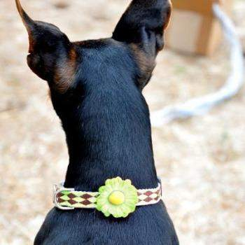 Gerber Daisy Dog Collar - All Metal Buckles(Green)2 - Paws & Purrs Barkery & Boutique
